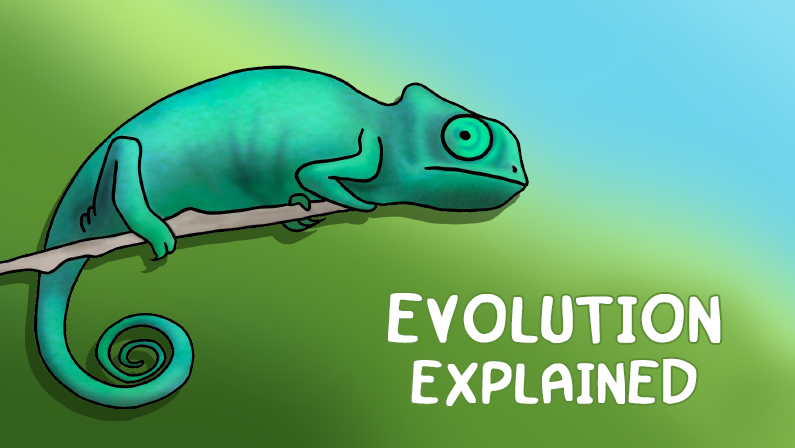 Evolution Explained: From Bacteria to Humans