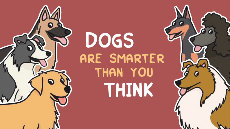 Why Dogs Are Smarter Than You Think